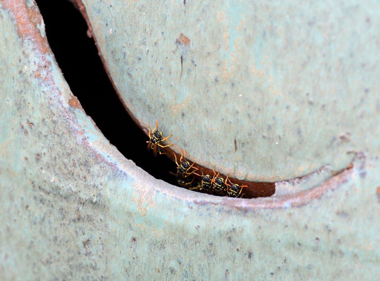 Wasps_DSC_8387