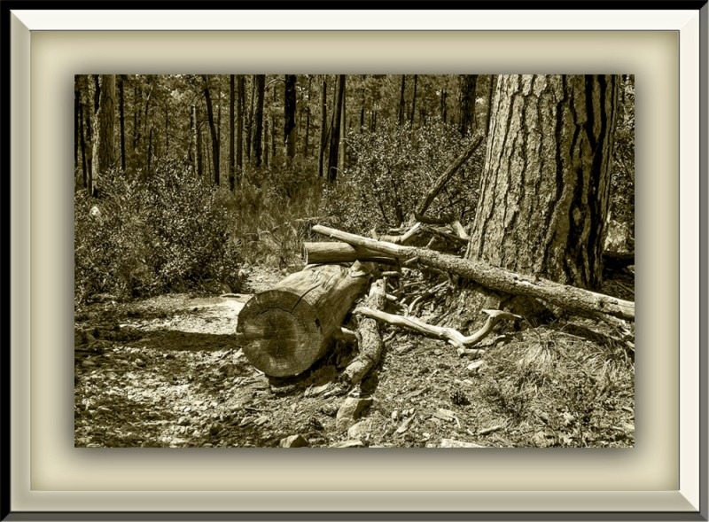 Hiking Logs (1 of 1)-21_Sepia blog