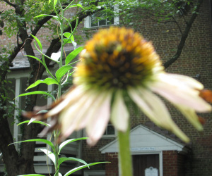 unpredictable macro focus on Canon pocket camera... Still a pretty good picture! {at John Marshall House, Richmond)