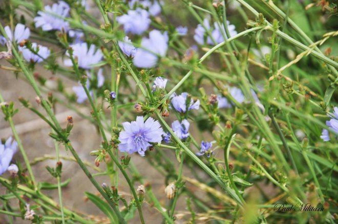 ornamental flower 2