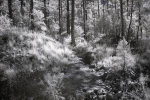 Stone path 3689 small