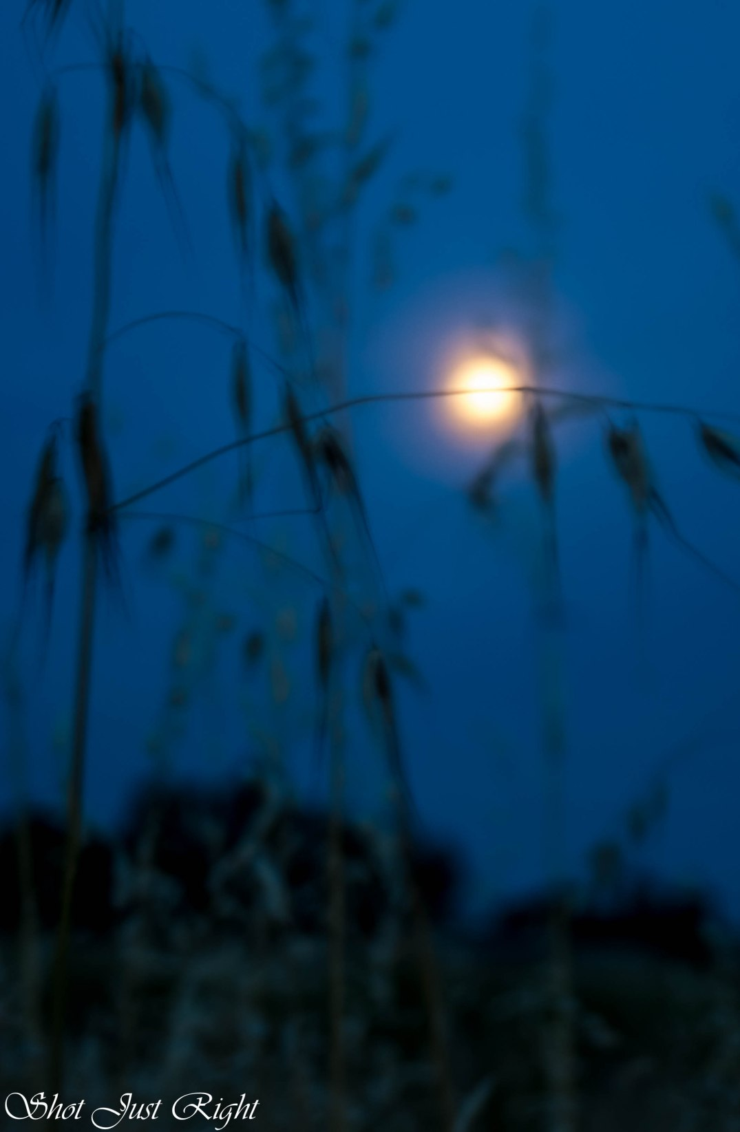 Tonights moon through grasses