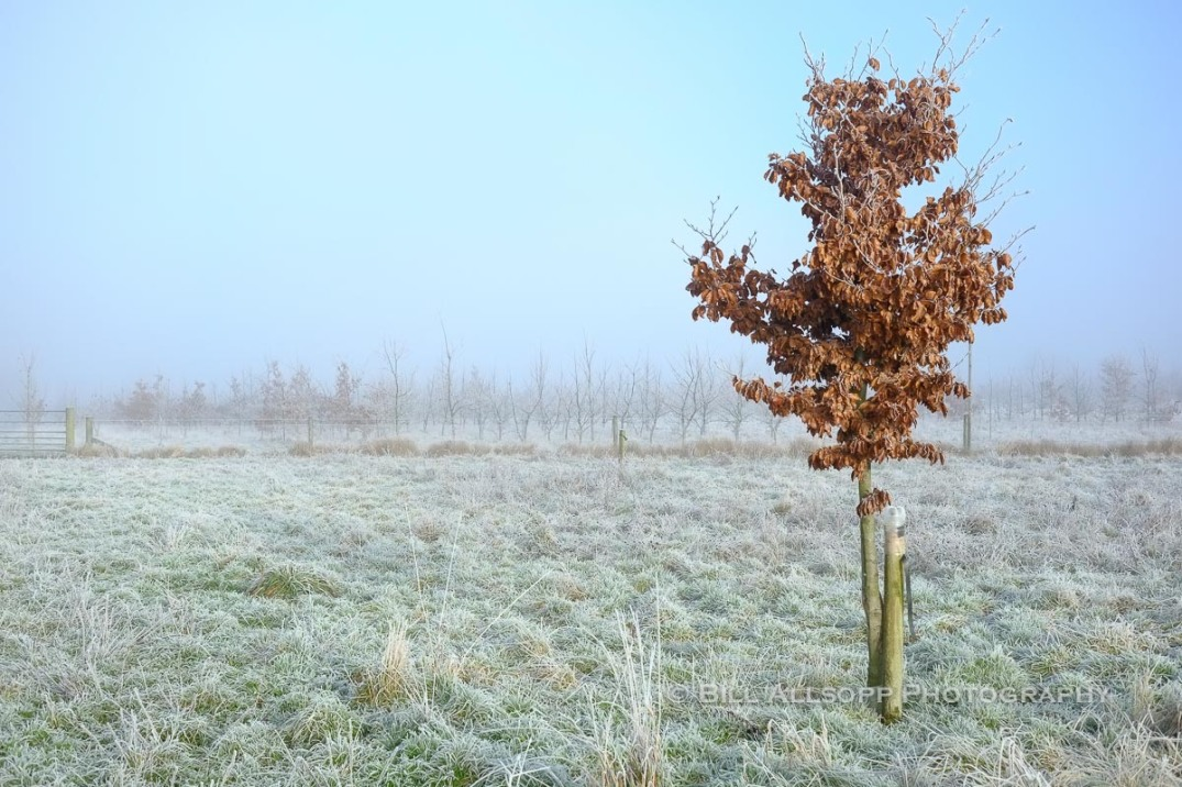 January - Edge of a National Forest planting scheme on a frosty morning.