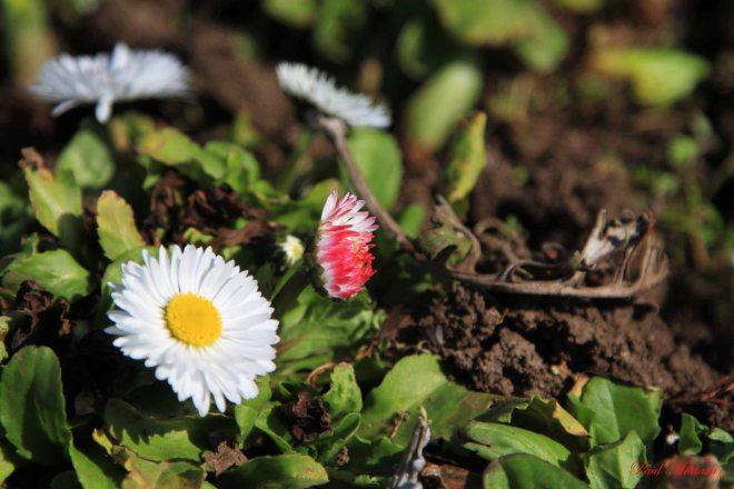spring ornamental  flowers
