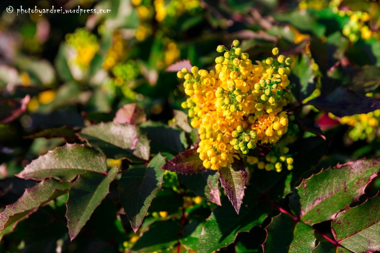Berrylike Flower