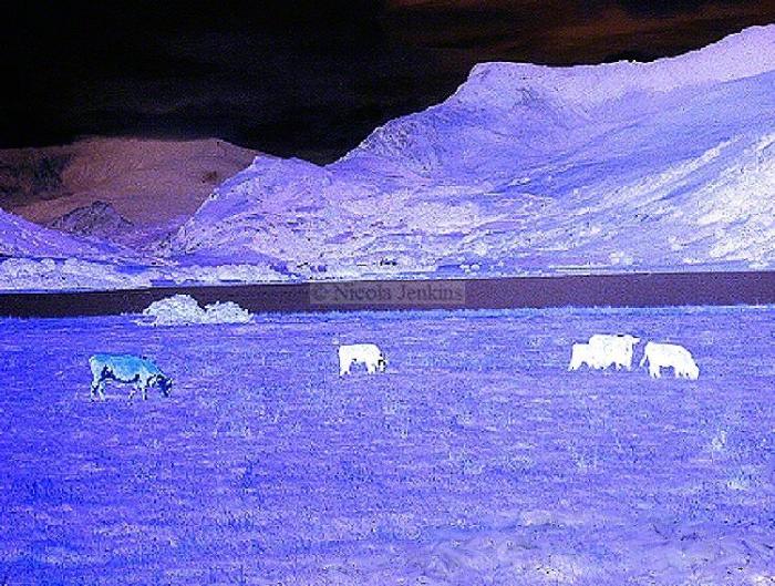 Purple Fields Image