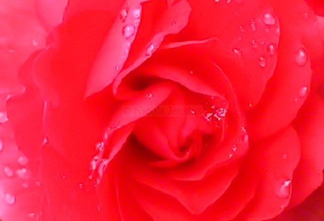 Red Floral Image